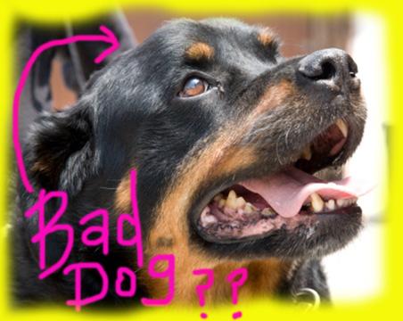vicious-dog.jpg